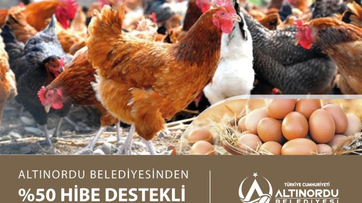 Altınordu Belediyesi 20 bin tavuk dağıtacak.