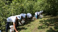 Ordu'nun Fındığını Yerli İşçiler Toplayacak