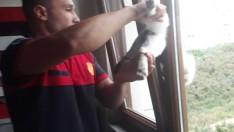 Ordu'da Pencereye sıkışan kediyi itfaiye kurtardı