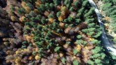 Kunduz Ormanları'nda sonbahar güzelliği