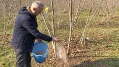 Fındıkta verimi arttırmak için kış bakımları yapılmalı