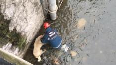 Ordu'da Mahsur Kalan Çoban Köpeğini İtfaiye  Kurtardı