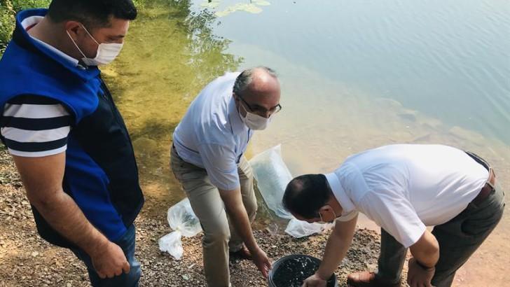 Ordu'da Gaga Gölü'ne 100 bin sazan balığı yavrusu bırakıldı