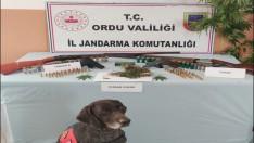 Ordu'da jandarmadan uyuşturucu operasyonu