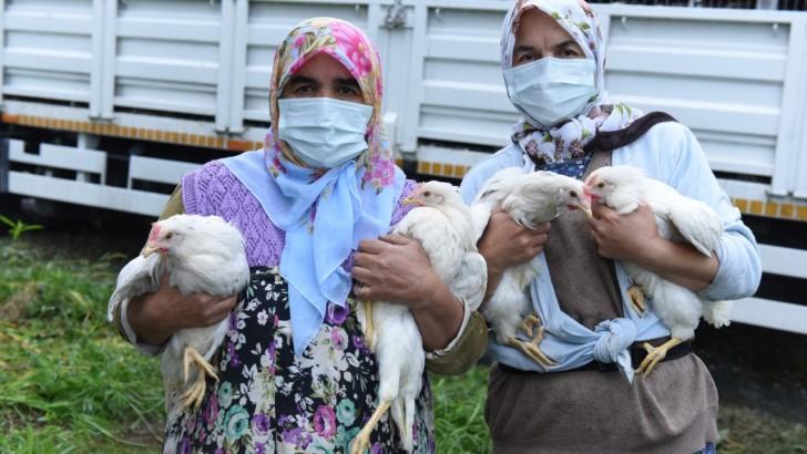 Altınordu Belediyesi yumurta tavuğu dağıttı