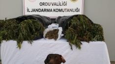 Ordu'da 16 kilogram esrar ele geçirildi
