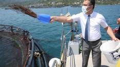Ordu'da Türk Somonu Hasadına Başlandı