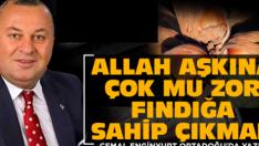 TMO DERHAL FINDIK ALIMINA BAŞLASIN!
