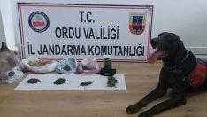 Ordu Perşembe'de Uyuşturucu Operasyonu