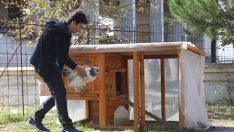Tavuklarından ayrı kalamayan öğrenci için okula kümes yapıldı