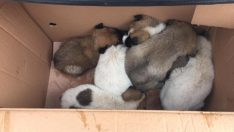 Soğuktan donmak üzere olan köpek yavruları kurtarıldı