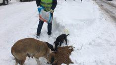 Büyükşehir, Sokak Hayvanlarına Şefkat Elini Uzattı