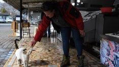 Tezgahındaki balıklarla çocuklar ve kediler arasında bağ kurduruyor
