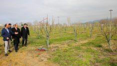 Vali Yavuz, Örnek Fındık Bahçesinde İncelemede Bulundu