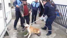 Karnında 3,5 kilo kist olan sokak köpeği sağlığına kavuştu