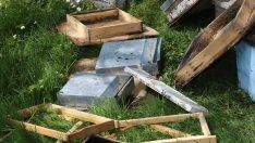 Ordu'da ayı arı kovanlarına zarar verdi