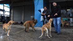 Sokak köpekleri dolmuşçuların yolunu gözlüyor