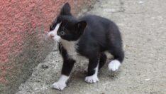 Okulda beslenen kedi yavruları karne gününde yuvaya kavuştu