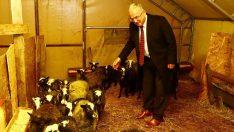 Ordu'da tarım ve hayvancılık destekleniyor