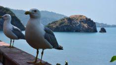 """""""Sakin şehrin"""" adası kuşlarıyla ilgi çekiyor"""
