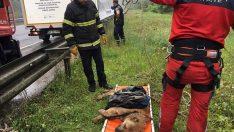 Ordu'da uçuruma düşen köpeği itfaiye ekipleri kurtardı