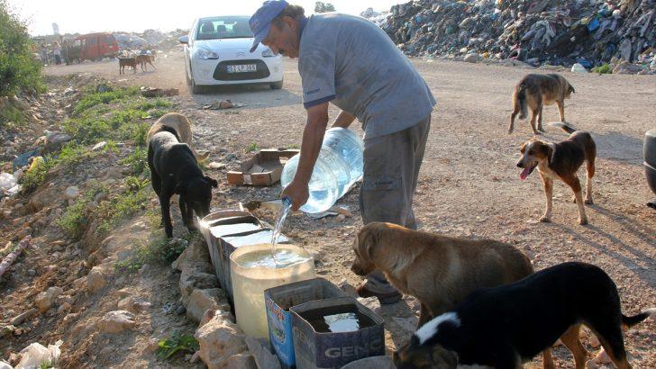 Sokak hayvanları için 11 yıldır su taşıyor
