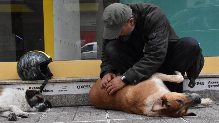 Yalnızlığını sokak hayvanları sayesinde unuttu