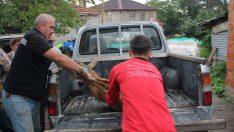 Aracın çarptığı karaca tedavi altına alındı