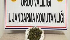 Ordu'da uyuşturucu operasyonu