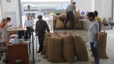 Soydan,Toprak Mahsulleri Ofisi Fındık Alımında Başarılı