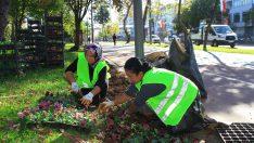 Ordu Caddeleri Çiçeklerle Donatılıyor