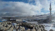 Ordu'da Yüksek Kesimlerde Kar Etkili Oldu