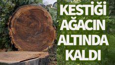 Ordu'da kestiği ağacın altında kalan kişi öldü