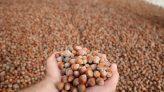 Fındık üreticilerine tarım sigortası uyarısı
