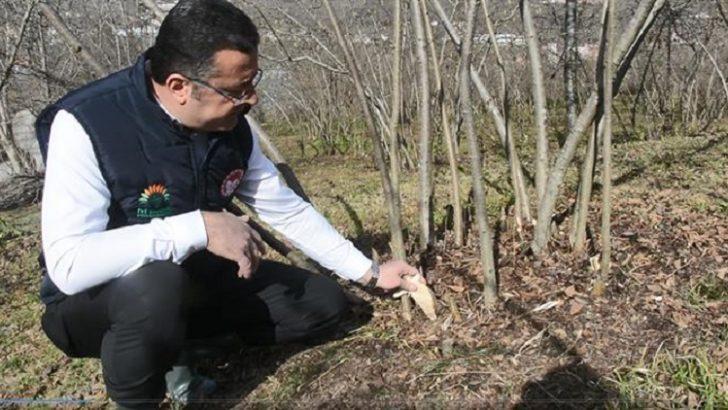 Tarım Müdürü Yılmaz, Dip sürgünleri yılda en az iki kez kesmelidir