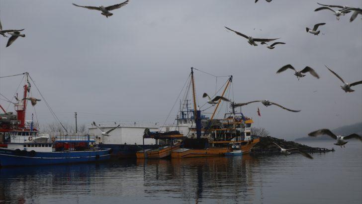 Orta Karadeniz'de balıkçılar sezonu erken kapatıyor