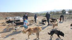 Ünye'de sokak hayvanları için besleme kapları yerleştirildi