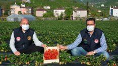 Ordu'da çiftçiler üretime kesintisiz devam ediyor
