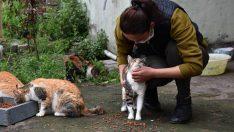 Ordu'da Bir Kadın Felçli kediden etkilendi, evini yuvaya çevirdi.