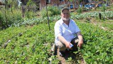 Ordu'da 73 yaşındaki İsa Mutlu, hayata çiftçilikle tutunuyor