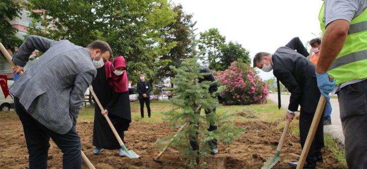 Altınordu Belediyesi ağaç dikti!